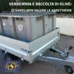 Vendemmia e raccolta olive: Di Santo non delude le aspettative